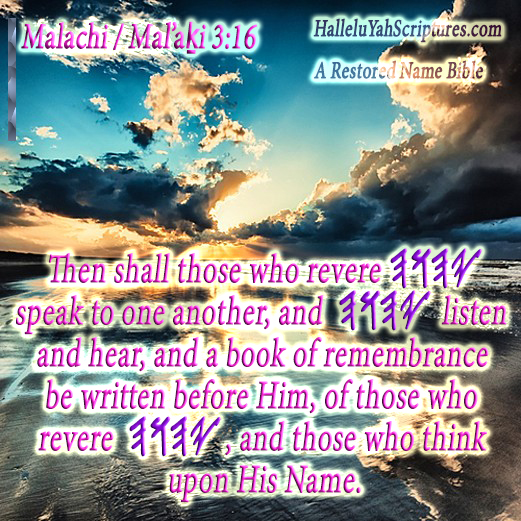 HalleluYah Scriptures Parallel + Hebrew Bible + Sacared Bible + Restored Name Bible + The Best Bible & Devine Name Bible + The Scriptures & Cepher Yahweh + Yahwah 347